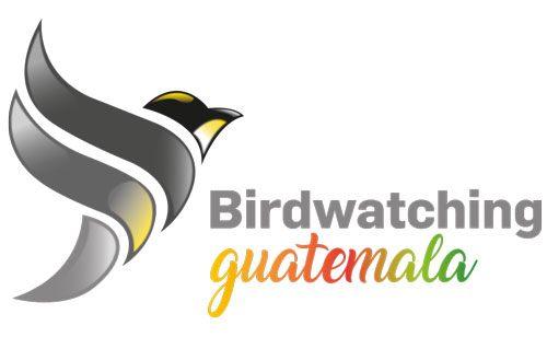 Birdwatching Guatemala