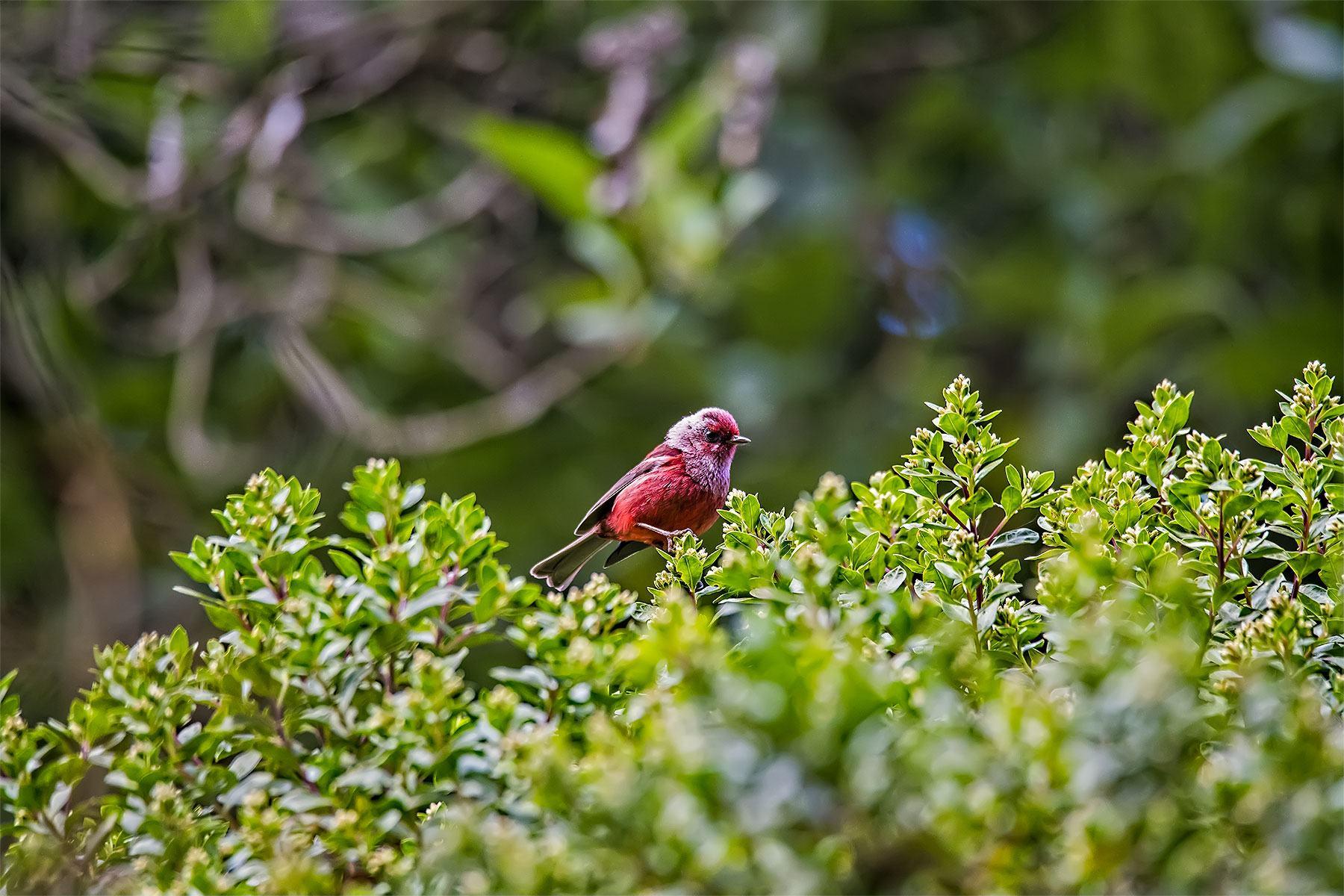 Mountains & Rainforest Birding Tour