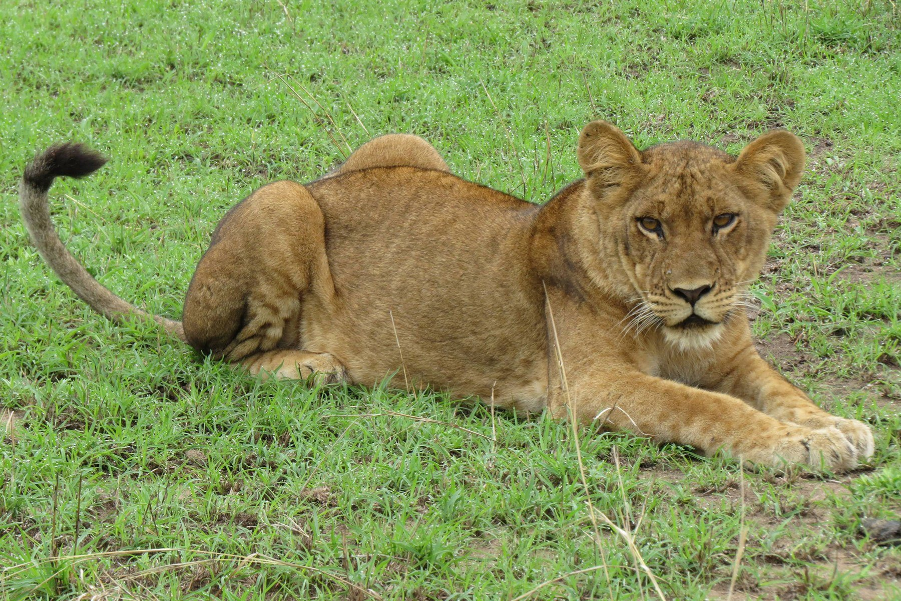johnnie uganda safaris