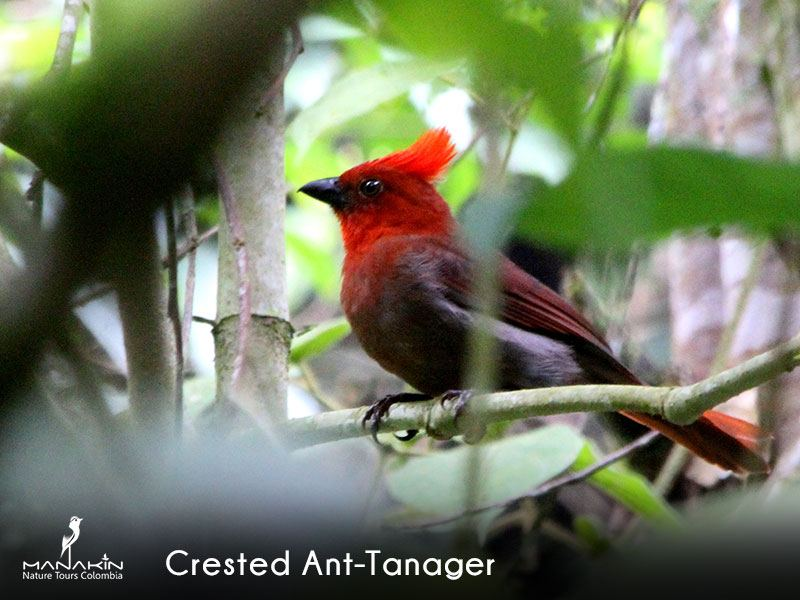 Manaking Nature Tours Colombia