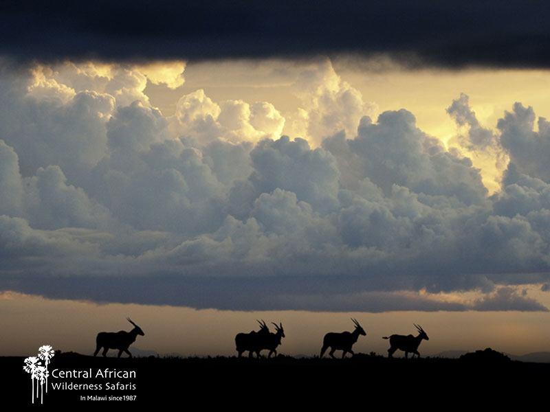 Central African Wilderness Safaris