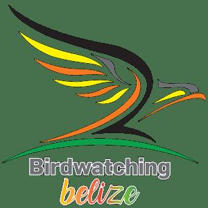 Birdwartching Belize