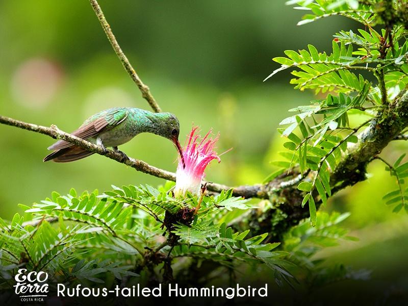 Ecoterra Costa Rica