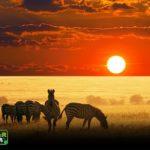 11Wildlife Tours Rwanda