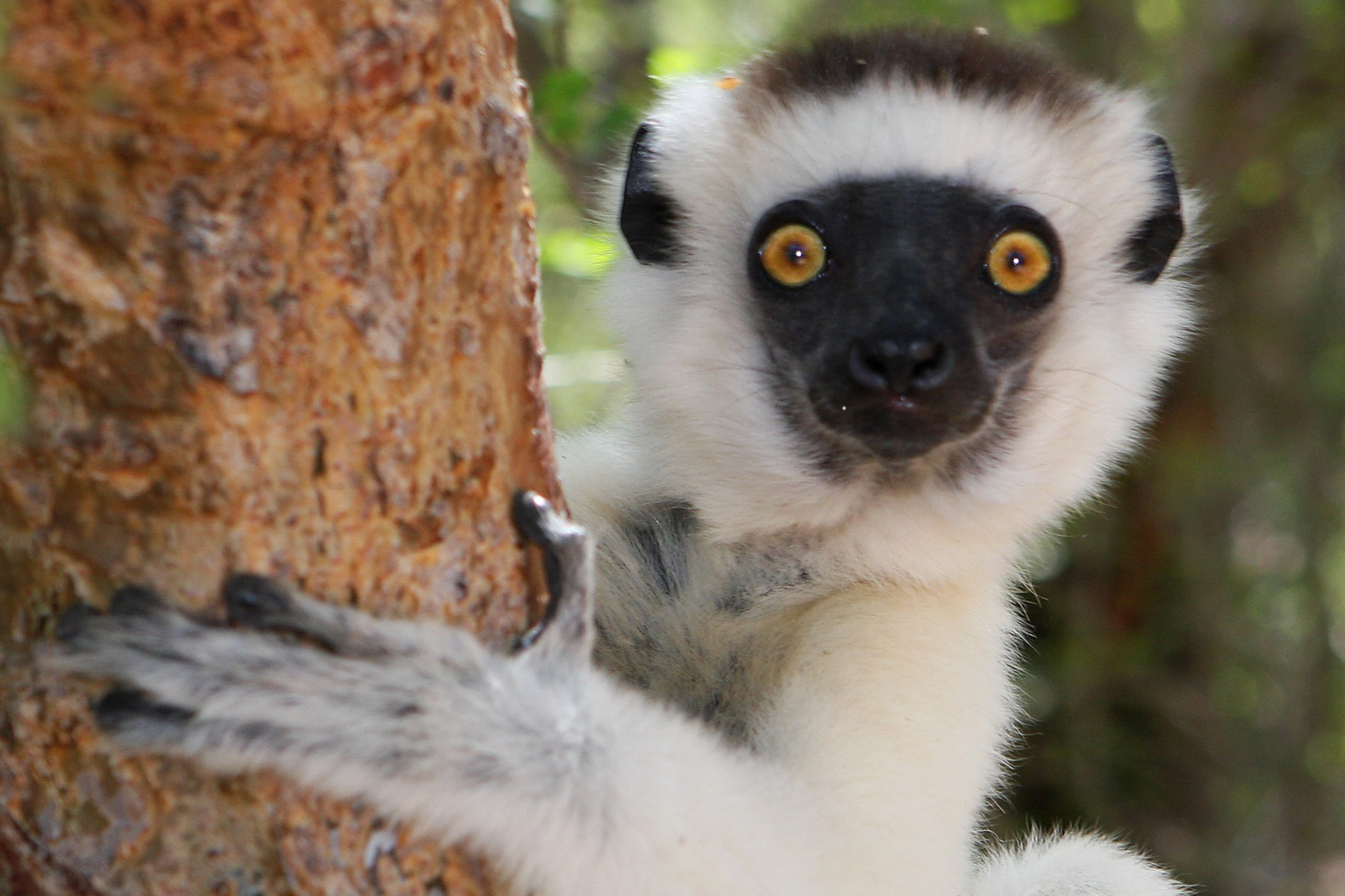 Madagascar Tourism Expeditions