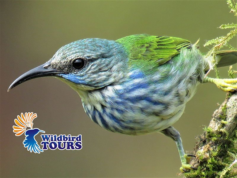 Wildbird Tours