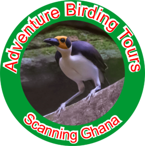 Adventure Birding Tours