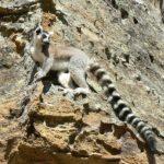 11Madagascar Tourism Expeditions